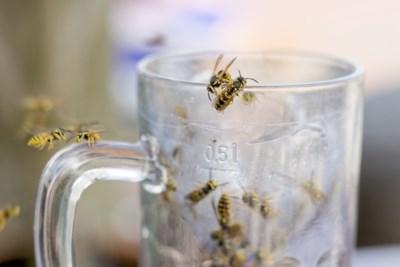 Na de mug, rups en mier dient de volgende zomerplaag zich aan