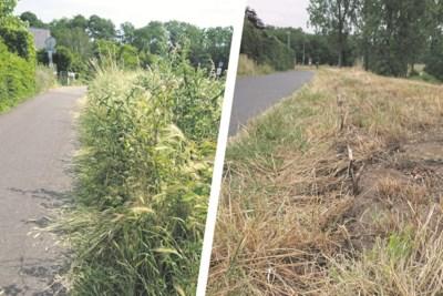 Te rigoureus gemaaid: tijdens Boomplantdag geplante heggen langs Grensmaas met de grond gelijkgemaakt