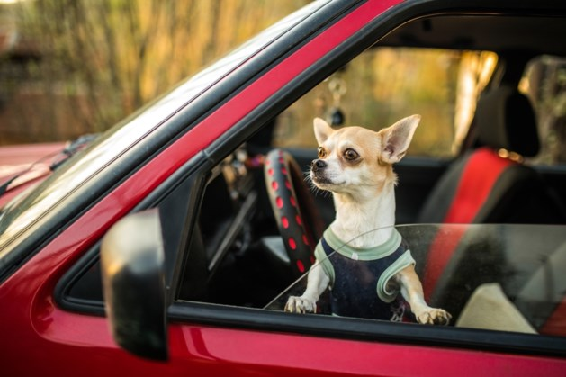 Naderende hitte: politie vraagt extra alert te zijn op dieren