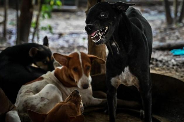Alarmcentrale ziet meer meldingen over hondsdolheid