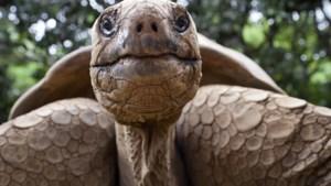 KLM moet half miljoen euro betalen voor noodopvang van schildpadden