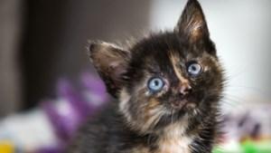 Meer dan honderd katten in Dierenbeschermingscentrum Born wachten op een baasje