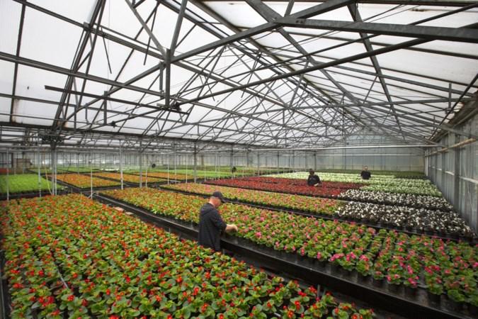 Werkvoorziening Oostelijk Zuid-Limburg wil af van medewerkers die nog in dienst zijn, maar niet meer kunnen werken