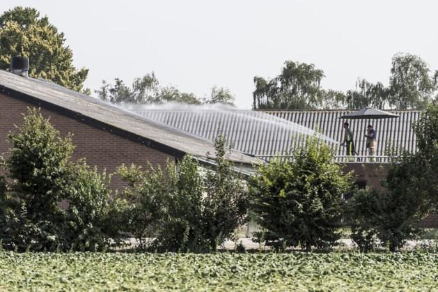 4.000 kippen komen om door extreme hitte in Neer