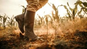 'Deze droogte kan de nekslag zijn voor veel bedrijven in de land- en tuinbouw'