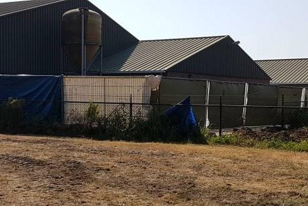 Stroomuitval: 2100 varkens stikken in stal Maarheeze