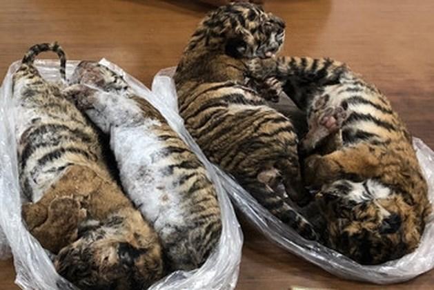 Politie vindt zeven diepgevroren tijgerwelpjes in kofferbak smokkelaar