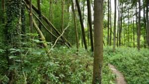 Bomen Stammenderbos Beekdaelen besmet met essentaksterfte; kap start begin september