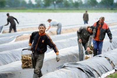 SP en ChristenUnie: rem op arbeidsmigratie