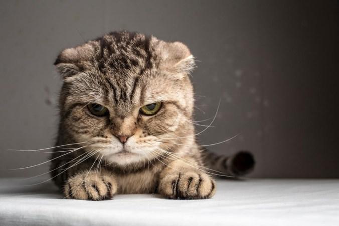 Het is Internationale Kattendag: tien grappige feiten over onze favoriete viervoeters