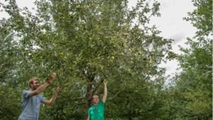 Meer sapjes, appelmoes of jam van eigen, ongebruikt fruit in Sittard-Geleen