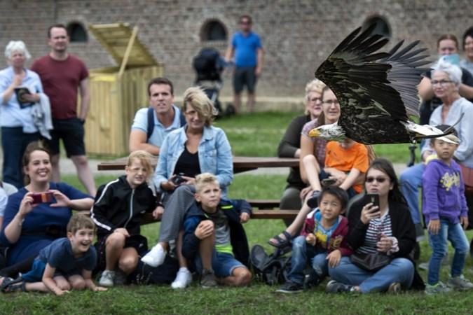 Roofvogelshow: 'Niet rennen jongens en meisjes, anders denkt deze arend dat je een haas bent'