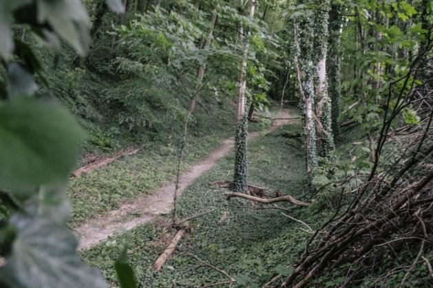 Boer Ospel moet nieuw bos aanleggen om illegaal gebruik landbouwgrond te compenseren
