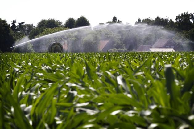 'Alle Limburgse boeren lijden in meer of mindere mate schade door droogte'
