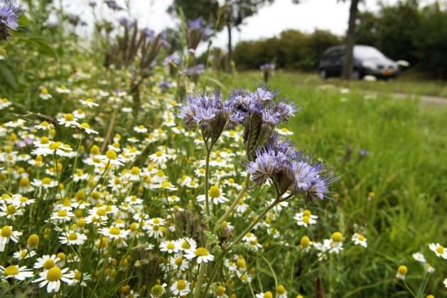 'Meer wilde bloemen, minder onkruid' in Urmond