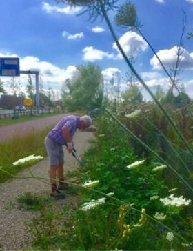 Bloemenberm in volle bloei weggemaaid in Amstenrade