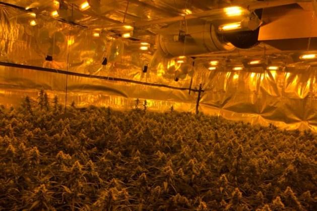 Honderden hennepplanten in woning Blerick, bewoonster (22) aangehouden
