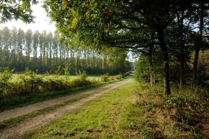 Grootschalige bomenkap en afgraving in Beesels Broek