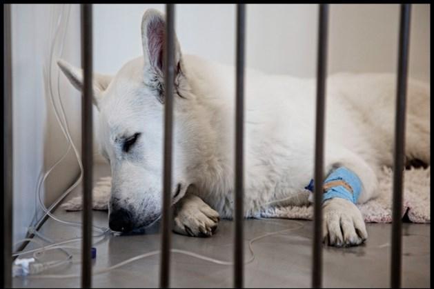 Duitse politie verlost buurt van hels geblaf, één hond dood in diepvries gevonden
