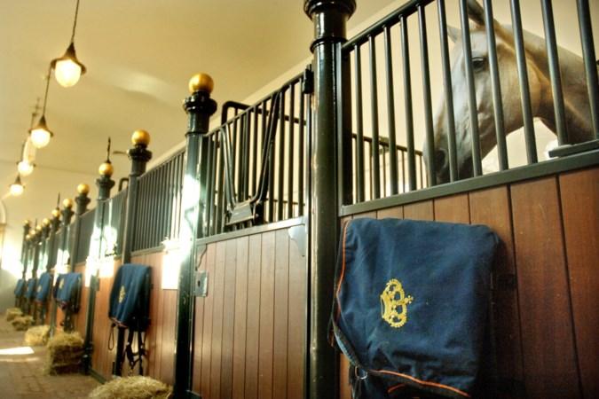 'Merkwaardig: de suggestie wekken dat Beatrix met opzet haar paard naar dé Volkert heeft vernoemd'