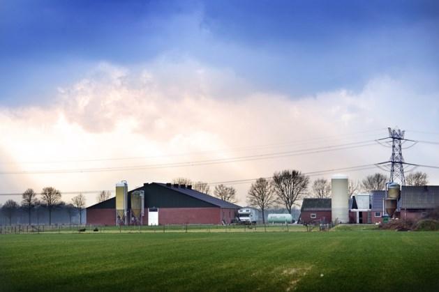 Tientallen Limburgse veeboeren gedupeerd door stikstofuitspraak