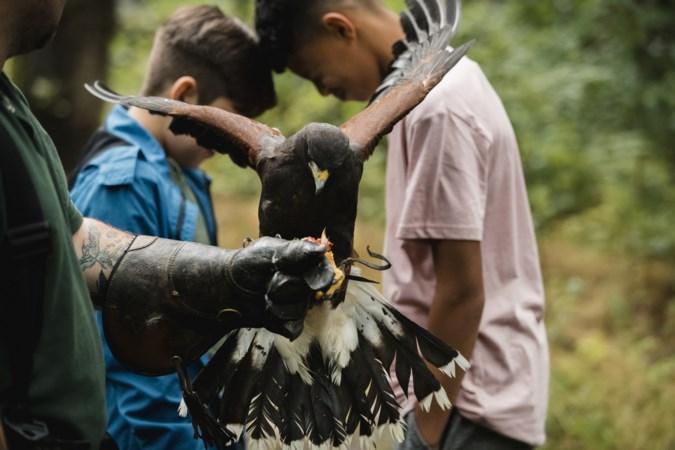 Brandbrief Vogelwacht Limburg aan gemeenten over dierenwelzijn bij roofvogelshows