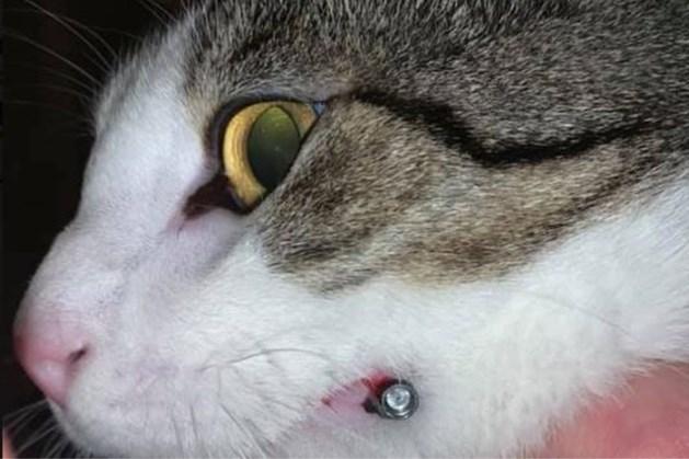 Kat in gezicht geschoten tijdens avondwandeling