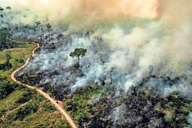 'President Bolsonaro verbrandt onze toekomst'