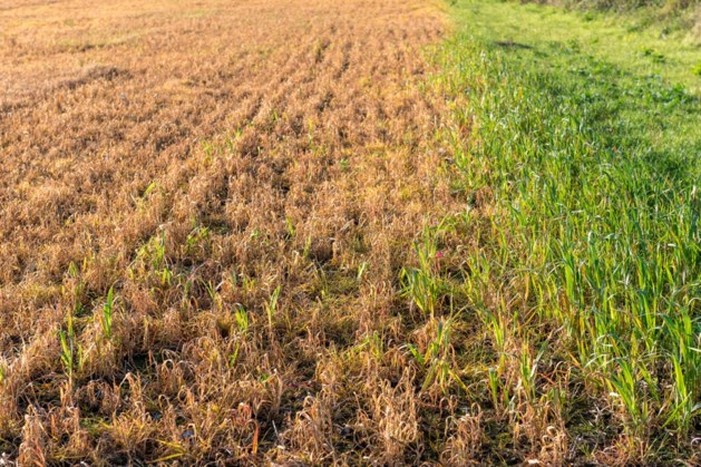 Dorpsburgemeester verandert Frans landbouwgifbeleid