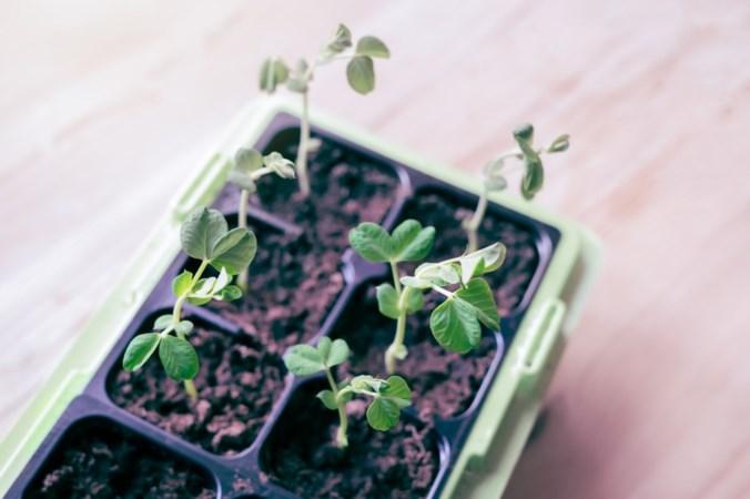 Plantenkweker Gipmans Venlo neemt branchegenoot Sevenum over
