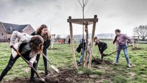 Limburgs bomenplan slaat goed aan