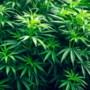 Drugspand gesloten in Venray na anonieme tip