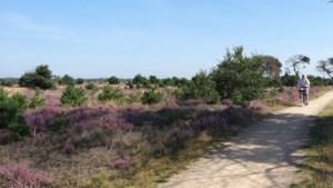 Op de fiets door de paarse Strabrechtse Heide