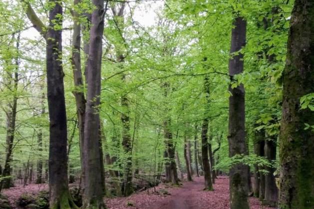 IVN wandelt door het Bunderbos