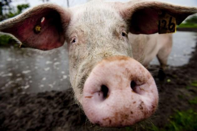 Boer krijgt geld om varkensstal te laten vervangen door zonneweide