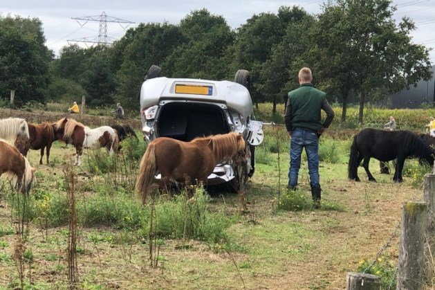 Auto belandt op z'n kop tussen de pony's