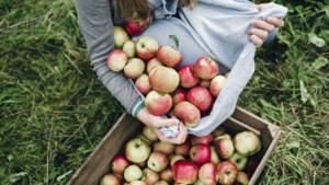 Helpen appels bij multiple sclerose?