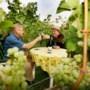 Educatieve wandelroute langs wijngaarden Wahlwiller