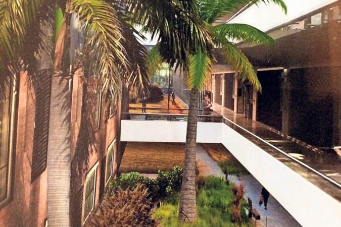 'De palmbomen reikten tot aan de ramen van de SP-fractie'