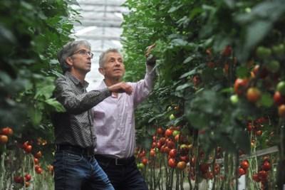 Innovatieve, biologische tuinders willen van het gas af