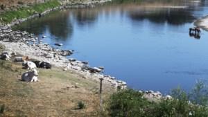 Tekort aan drinkwater uit Maas dreigt