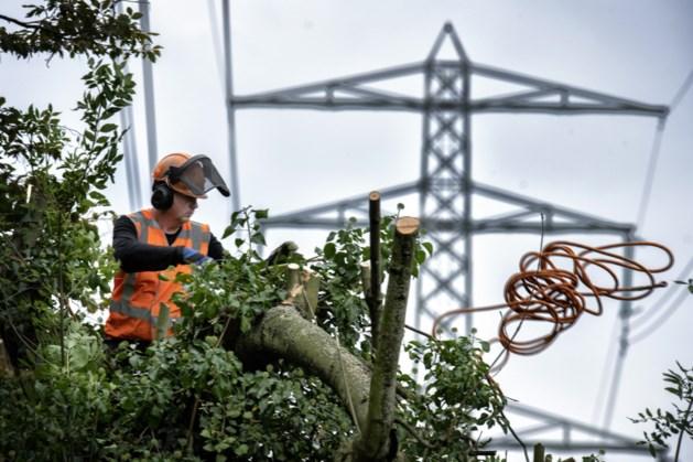 Snoeiwerk op hoog niveau in Ubachsberg houdt bomen veilig voor hoogspanningskabels