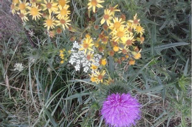'Bloemen zaaien voor de bijtjes' in Beekdaelen