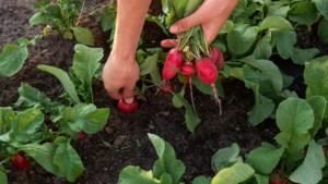 Nederland loopt achter met biologische landbouw