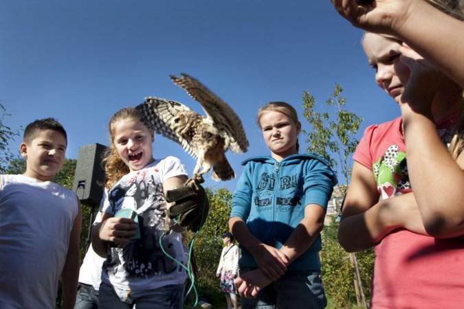 Valkenburg wil meer helderheid over shows met roofvogels