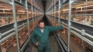 Zo gaat het er aan toe in megastal met 250.000 kuikens: 'Onze dieren hebben het goed'