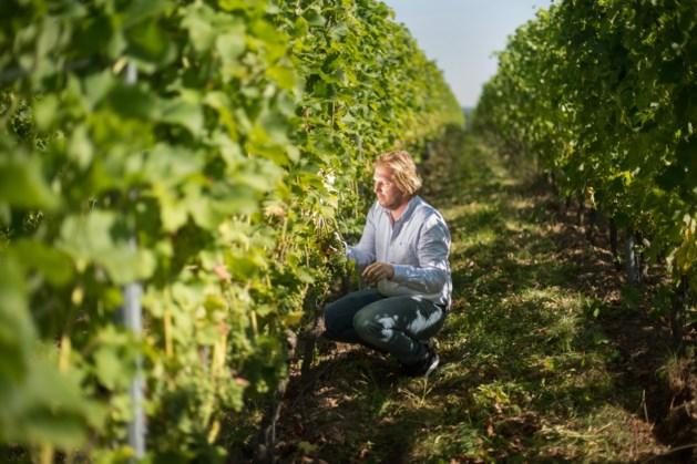 Klankbordgroep met Vijlenaren voor plan uitbreiding wijndomein Sint Martinus