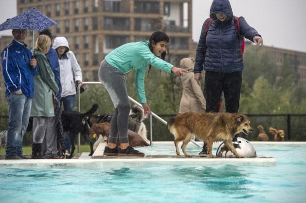 Hondenplons in Geusseltbad Maastricht
