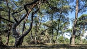 Leren hoe bomen overleven in Born