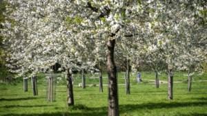 Moestuin Thorn wordt fruitboomgaard